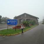 alinemesquita