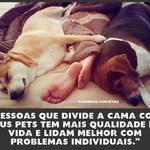 consciencia_animal
