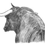 vacasytoros